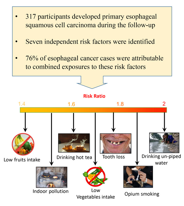 Graphic detailing identified oesophageal cancer risk factors