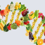 DNA double helix made up of vegetables